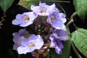 botanical gardens flowers