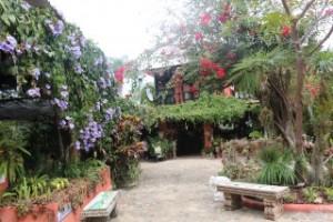 botanical puerto vallarata