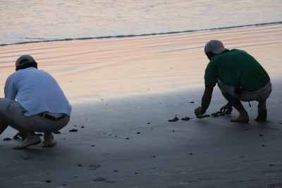 baby sea turtle release at sunset in Mexico