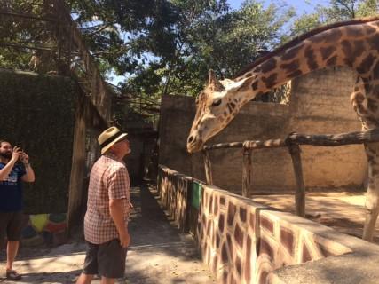 giraffe puerto vallarta zoo